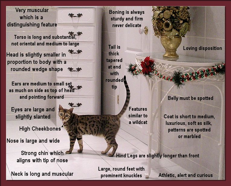 Bengal Breed Standard