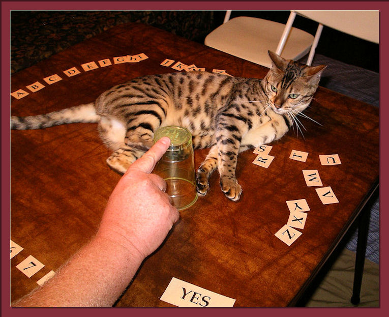 Bengal Cat Playing Ouija and Interacting well with Family