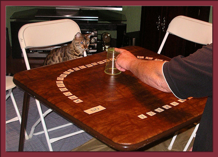 Bengal Cat Focusing on Game