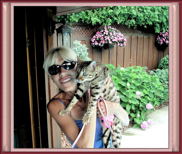 Bengal Cat Lucy Law Being Held Outdoors for her Photo Opportunity