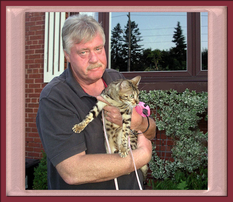 Bengal Cat Outdoors Being Held With Her Leash