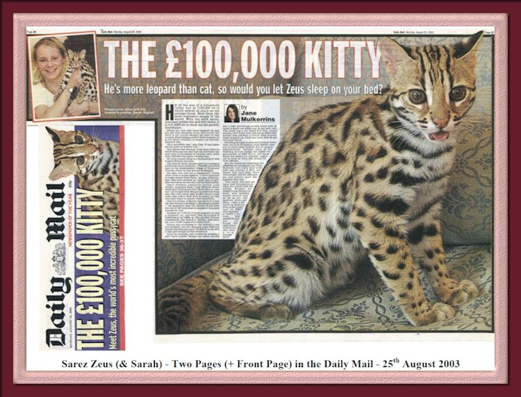 Zeus the World's Most Expensive Bengal Cat