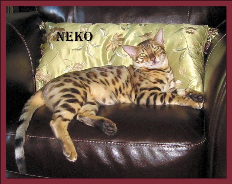 Bengal Cat Neko