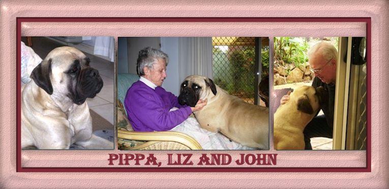 Bullmastiff Pippa from Australia