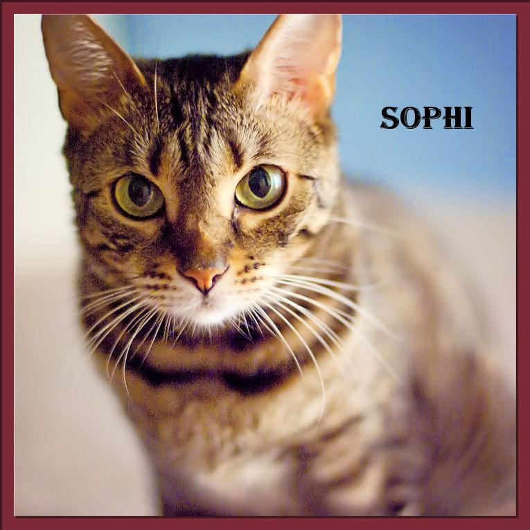 Sophi